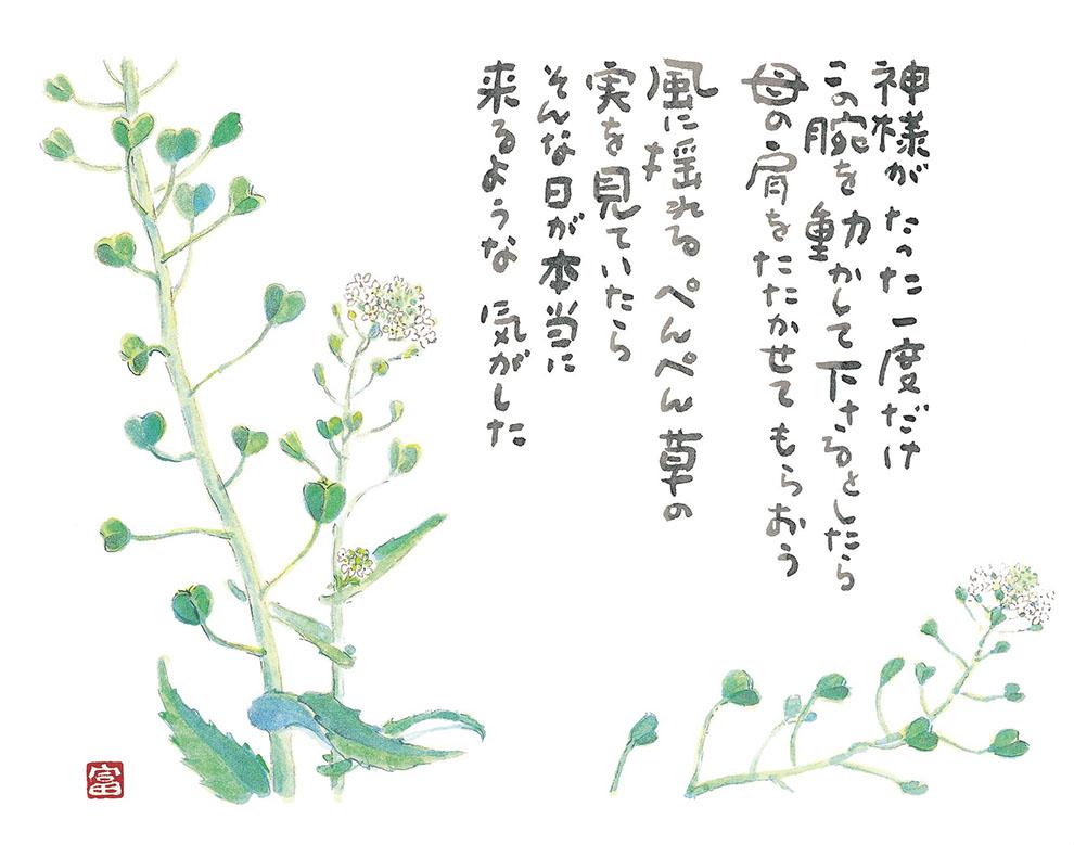 2001-ぺんぺん草